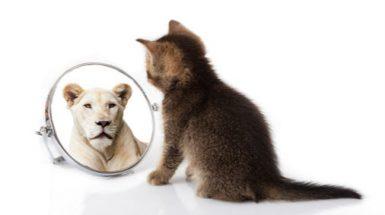 הסוד לדיאטה? להאמין בעצמך כמו שחתול מביט במראה ורואה עצמו כנמר